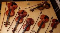 All sizes of Violins